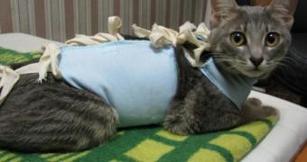 В каком возрасте стерилизуют кошек ?
